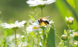 Concours photo : « Les insectes pollinisateurs »