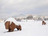 La Garde sous la neige